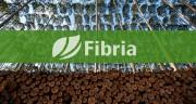 """Технология """"Fibria"""" позволяет уменьшить потребление воды при выращивании эвкалиптов"""