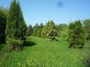 Интродуцированные растения – применение