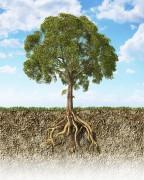 Лес и почва: взаимное влияние