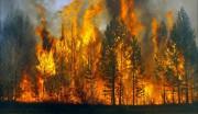 Места пожаров в лесах России