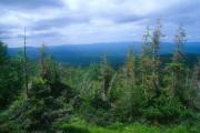 Антропогенное воздействие на леса