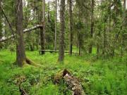 Проблемы устойчивости лесных экосистем