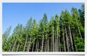 Фонд охраны природы заключил договор о партнерстве с «Apple»
