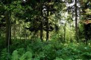 Природоохранные мероприятия обходятся Segezha Group в 60 млн руб.