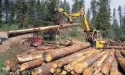 Региональная концепция лесопользования будет разработана на территории Тверской области