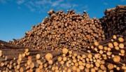 Информация о рынке древесины и лесоматериалов