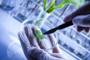 Лесные биотехнологии - перспективы развития