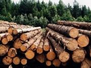 В Пермском крае работа всех лесопромышленных предприятий урегулирована на законодательном уровне