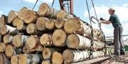 """Для реализации китайско-белорусских инвестпроектов """"Беллесбумпром""""  сможет привлекать иностранных работников"""