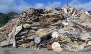 В Бресте открыт комплекс, перерабатывающий древесные отходы в биотопливо