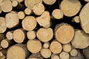 Чешские леса будут обеспечивать больше рыночной стоимости