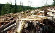 Список лесодефицитных районов Приакамья утвержден