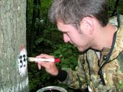 Государственная инвентаризация лесов - роль и назначение