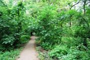 Деревья интродуценты - использование и применение