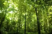 Основные лесообразующие породы