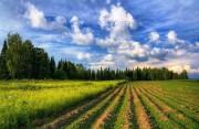 Биологическая рекультивация нарушенных земель