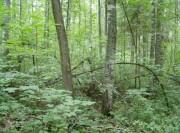 Порослевое возобновление леса