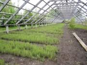 Назначение лесного селекционно-семеноводческого центра