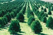 Процессы, связанные с лесовыращиванием