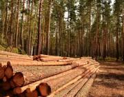 Технологический процесс лесосечных работ