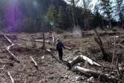 Албания запретила использование леса на 10 лет