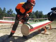Центр по подготовке лесозаготовительных специалистов появится в Красноярском крае