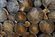 Цены на древесину в Великобритании на подъеме, что и ожидалось после выхода из ЕС