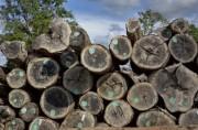 Northern State Forests предоставили дополнительные объемы леса для лесозаготовок
