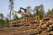 На юге Архангельской области появится лесопромышленный кластер