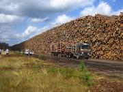 Вопрос о появлении лесной бирже в Кировской области обсуждает региональное правительство