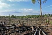 Индонезия переправила первые контейнеры древесины по схеме ЕС