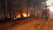 Пожары в Чили стали причиной лесной катастрофы
