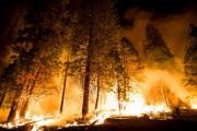 Лесная промышленность Чили потеряла в огне около 40 000 гектаров