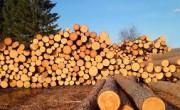 Иркутский регион разрабатывает предложения по изменению лесного законодательства страны