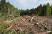 Рослесхоз провел собрание комиссии по реализации пилотного проекта по контролю за источником древесины в Иркутском регионе