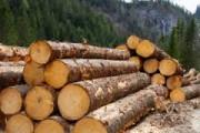 В Костромском регионе зарегистрировано 54 случая нецелевого применения древесины