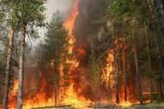 Затраты областного иркутского бюджета на охрану лесов в нынешнем году возрастут