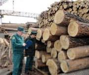 В Кировском регионе ведется борьба с незаконным оборотом лесоматериалов