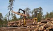 В Томском регионе сформирован лесопромышленный кластер