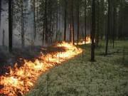 Добровольцы будут участвовать в профилактике и тушении лесных пожаров в Иркутском регионе