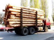 В Томском регионе сформированы передвижные посты для контроля за транспортировкой лесоматериалов