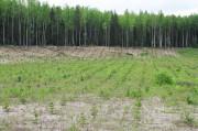 """""""Алтайлес"""" оказывает помощь волонтерам в создании новых лесов"""
