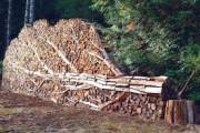 В лесничествах Новосибирска в рабочем режиме происходит заготовка дров для населения