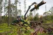 На Сахалине используется новое оборудование для очистки леса от ветровала
