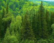 Результаты обследования лесных питомников Сахалинской области