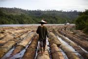 Обеспечение «ответственной» поставки древесины для внутренних нужд в Индии