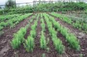 На землях Минобороны России закончился весенний сезон посадки леса