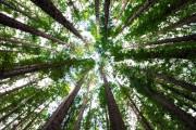 Британские ученые накачают лес углекислым газом для эксперимента