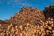 Цены на пиломатериалы хвойных пород в Северной Америке достигли рекордной высоты