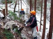 В японских лесничествах не хватает сотрудников